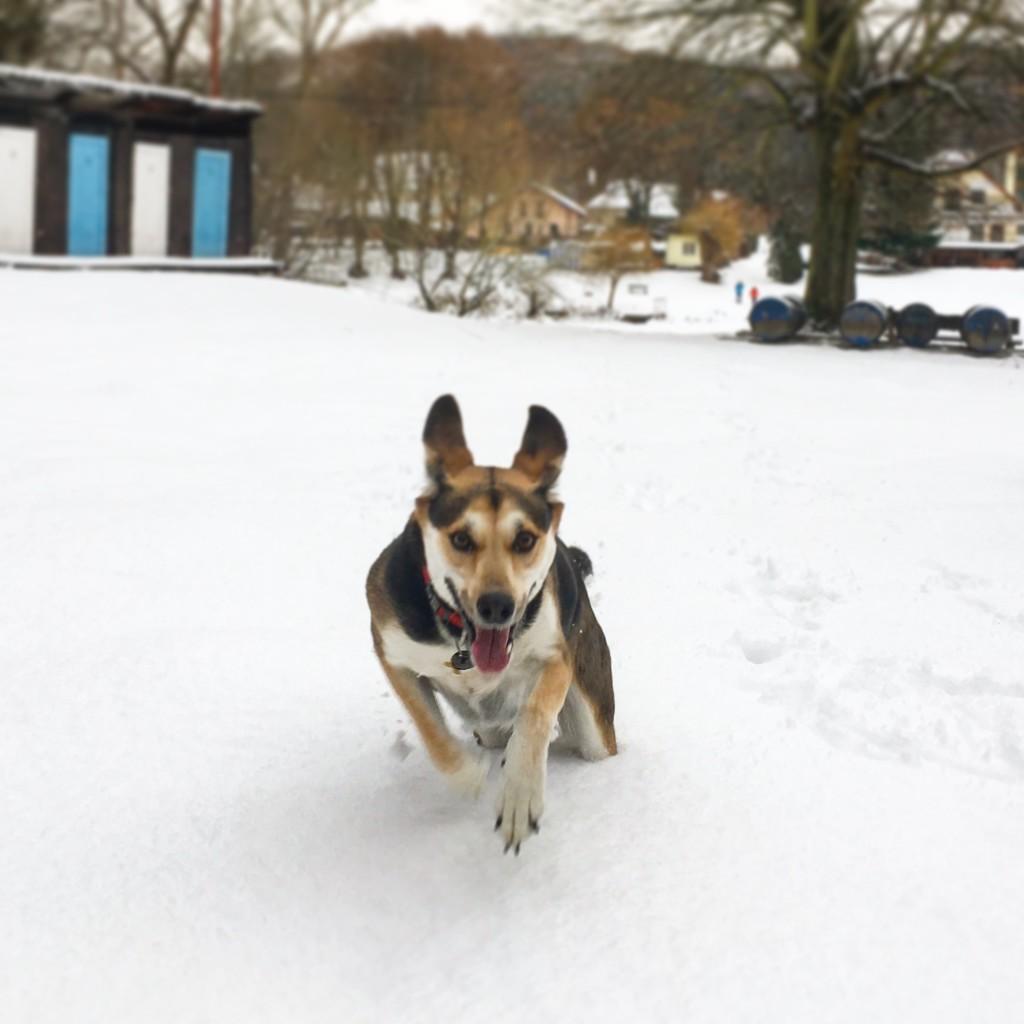 Miluju sníh!... Teda teď už jo :)